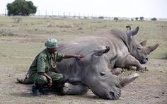Đủ mọi chiến dịch, vì sao người Việt Nam vẫn mua sừng tê giác?