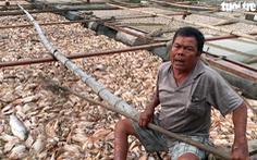 Chết lặng với flycam cảnh cá chết la liệt trên sông La Ngà