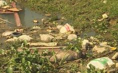 Heo chết trên kênh mắc dịch tả, 50.000 con heo Thạch Hà 'báo động đỏ'