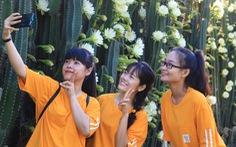 'Xúm nhau' chụp hình với hàng rào xương rồng nở hoa nọc trụ