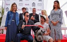 Cô chó pitbull trong phim của Quentin Tarantino đoạt Cành cọ vàng