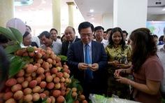 Lần đầu tiên vải thiều Bắc Giang có sản phẩm hữu cơ