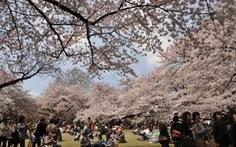Cách Nhật Bản thu hút chi tiêu của khách du lịch
