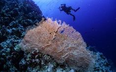 LHQ cảnh báo nguy cơ 1 triệu loài bên bờ vực tuyệt chủng