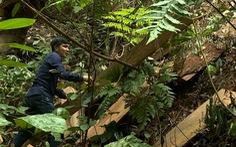 Khởi tố 5 'lâm tặc' cưa trộm gỗ quý tại lâm trường Trường Sơn