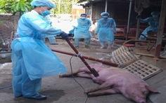 TP.HCM ban hành mức hỗ trợ người chăn nuôi có heo bị dịch tả châu Phi