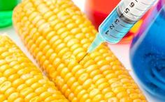 Mỹ đẩy nhanh quy trình xem xét sản phẩm nông nghiệp biến đổi gene