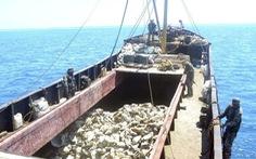 Dân Philippines 'la làng' vì đội tàu bắt sò tai tượng của Trung Quốc