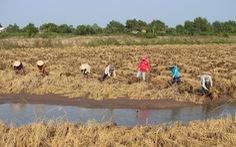 Ngân hàng Thế giới đề nghị ĐBSCL giảm diện tích trồng lúa