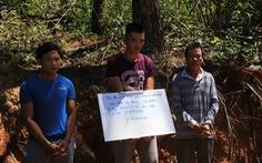 Nghi phạm chủ mưu hạ sát 3.500 cây thông bị bắt tại Lào