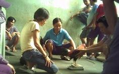 Chính quyền phường cam kết trấn áp tụ điểm đá gà trong chung cư