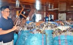 Trung Quốc ngừng mua, hàng ngàn tấn mực ứ đọng