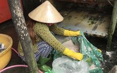 Bất thường thương lái tranh giành mua vảy cá ở miền Tây