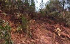 Cháy rừng 'uy hiếp' đường dây 500 kV, EVN báo cáo Thủ tướng