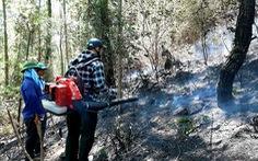 Một phụ nữ tử vong khi chữa cháy rừng ở Nghệ An