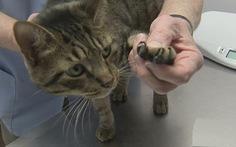 Ở New York, cắt móng vuốt mèo sẽ bị phạt... 1.000 USD