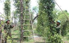 Lốc xoáy cuốn phăng nhà cửa, cây cối tại huyện biên giới Bù Đốp