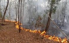 Cháy rừng keo ở Quảng Nam