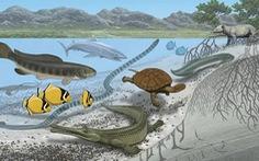 Nhiều loài cá khổng lồ từng sống tại sa mạc Sahara?