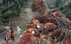 Indonesia trước nguy cơ mất thị trường dầu cọ chục tỉ USD từ EU