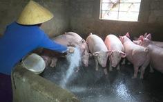 Việt Nam có kết quả bước đầu về văcxin chống dịch tả heo châu Phi