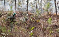 Cháy lớn ở rừng thông đặc dụng tại Huế, 1.000 người đang khống chế