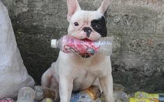 'Vựa ve chai' của chú chó đáng yêu tại Hà Nội