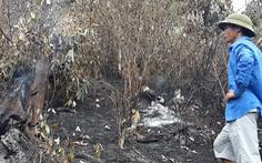 Tan hoang những cánh rừng Hà Tĩnh sau 3 ngày đêm cháy lớn