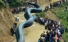 Bắt người nói động đất do... rồng khổng lồ dài 120m