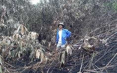Yêu cầu ngân hàng 10 tỉnh hỗ trợ người vay bị thiệt hại do cháy rừng