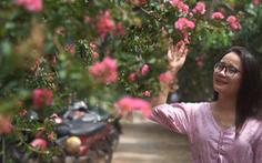 Video: Nao lòng góc phố hoa Tường Vi
