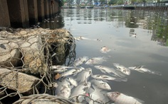 30 tỉ đồng nạo vét kênh Nhiêu Lộc - Thị Nghè ngăn cá chết