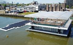 Nuôi bò trên biển ở Rotterdam