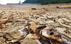 Hồ chứa nước ở Huế cạn khô kỷ lục, hơn 320ha lúa nguy cấp