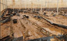 Video: Nhiều nhà kính nông nghiệp kỹ thuật cao xơ xác sau lũ