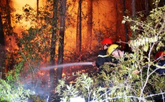 Rừng thông núi Ngũ Phong cháy lớn, nghi do đốt vàng mã