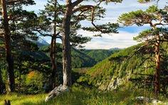 Phát hiện cây sồi trường thọ từ thời Trung cổ