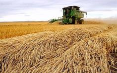 Lờ tịt hàng Mỹ, Trung Quốc âm thầm mua nông sản Canada