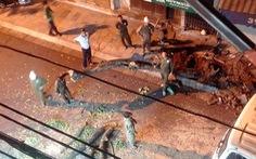 Chặt hạ khẩn cây sưa đỏ trên phố cổ Hà Nội vì đổ nghiêng