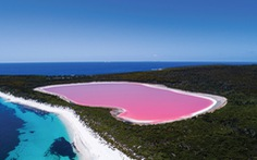 Tìm cách 'cứu' hồ nước hồng không còn... hồng nữa