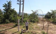 Có dấu hiệu hủy hoại rừng tại dự án làm điện mặt trời 'chui'