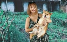 'Cậu Vàng' của 'Lão Hạc' phải là chó ta, Shiba Inu là chó Nhật Bản!
