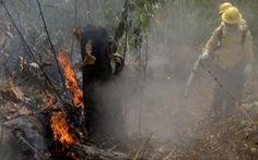Cháy rừng Amazon ảnh hưởng gì đến thế giới?