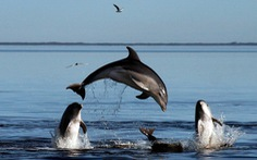 New Zealand cấm du khách bơi cùng cá heo mũi chai