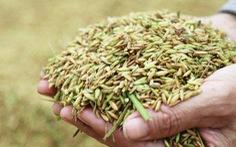 Nông dân Nghệ An hối hả thu hoạch lúa 'chạy' bão số 4