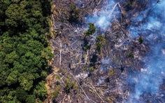 Cháy rừng Amazon: Chẳng lẽ chỉ vì miếng bít-tết?