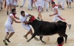Xem đua bò tót, một du khách bị bò húc chết