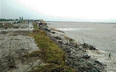 Nguy cơ vỡ đê biển Tây ở Cà Mau đang rất cao