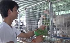 Video: Cho chim trĩ nghe nhạc kiếm thu nhập hàng chục triệu đồng tháng