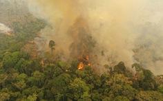 Cháy rừng Amazon đe dọa 265 loài động vật nguy cấp